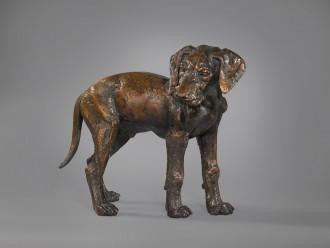 Pointer Pup, Unknown