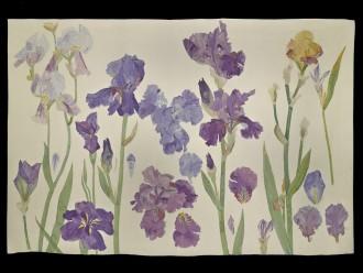 Irises, 1987